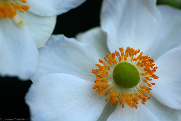 Sunburst On White